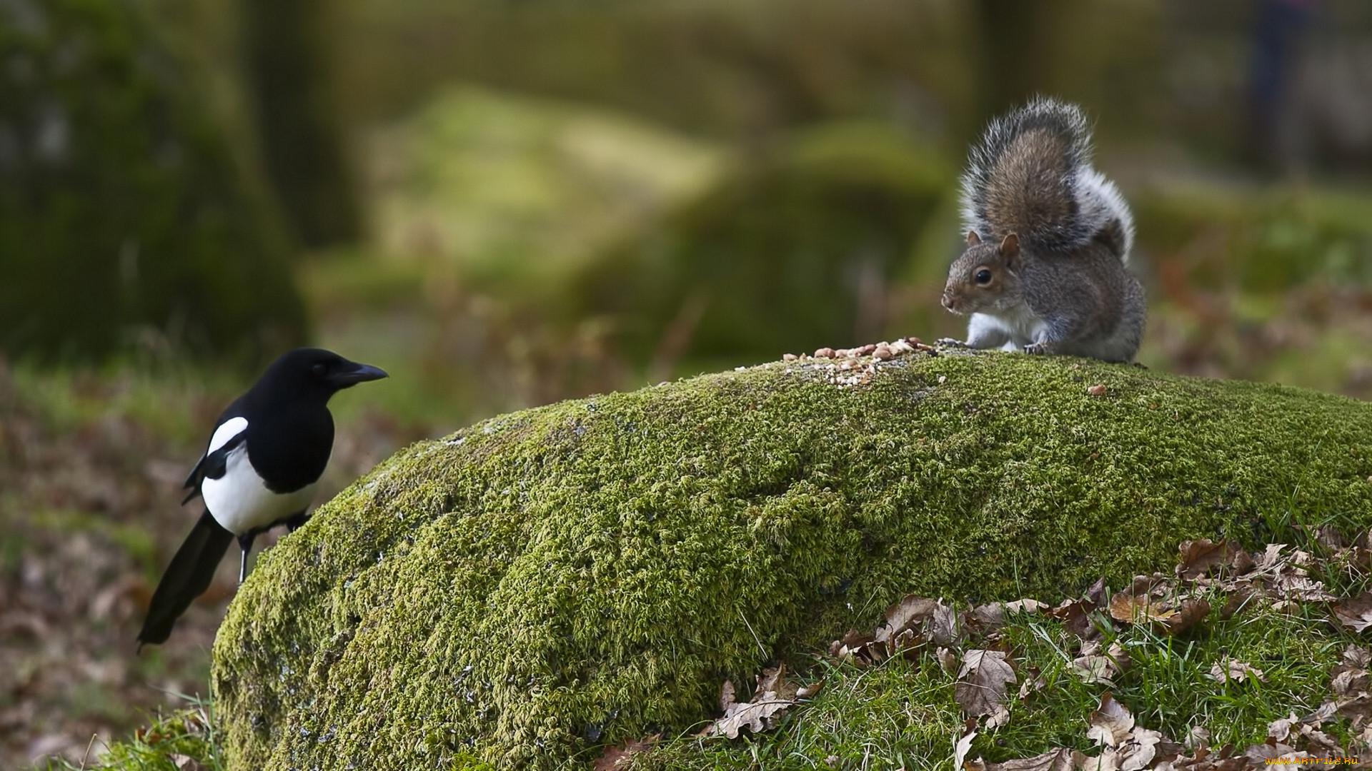 прикольные фотографии птиц и животных в лесу имеется большой